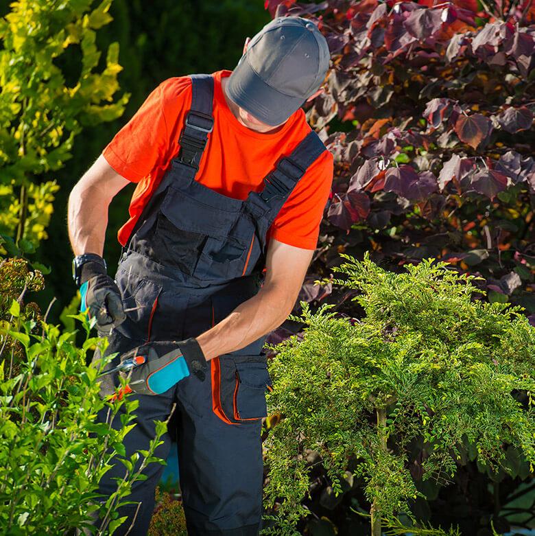 Jardinier en action